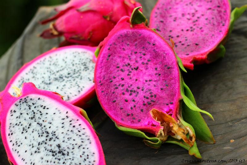 Dragon Fruit California Tropical Nursery