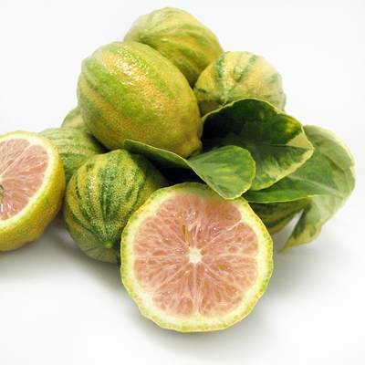 california-tropical-variegated-pink-lemon-1.jpg