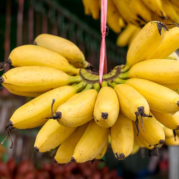 california-tropical-lady-finger-banana-1.jpg