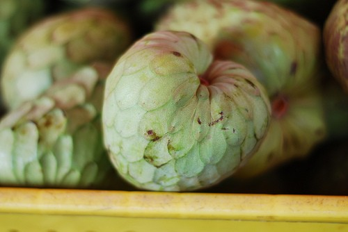 california-tropical-dr-white-cherimoya-1.jpg