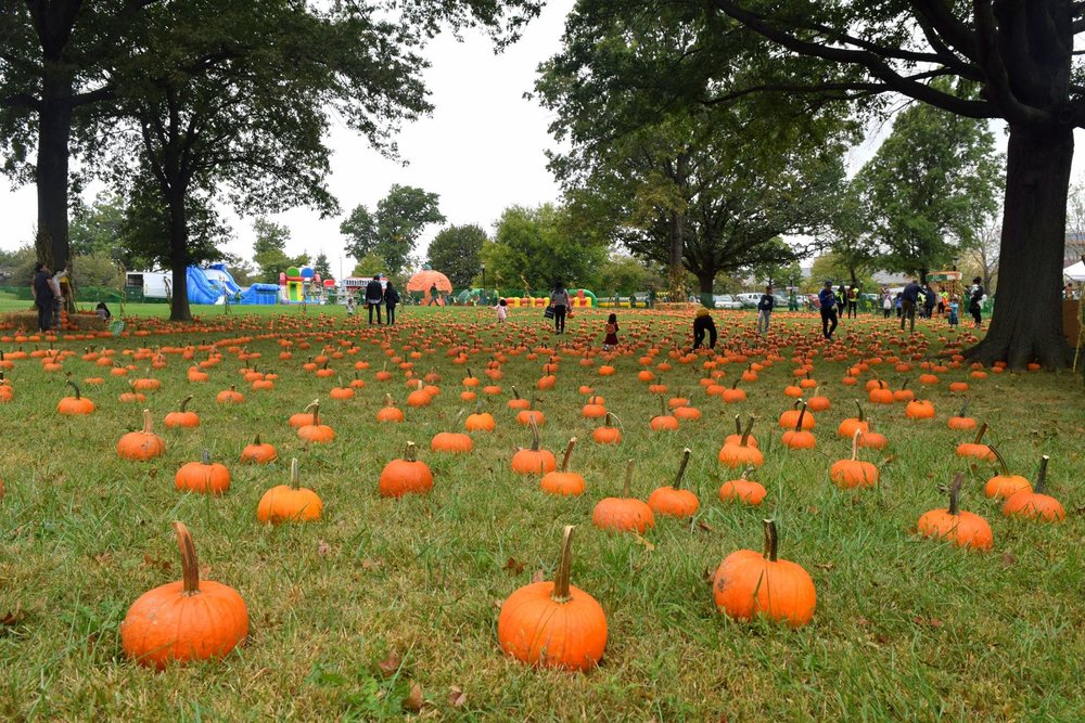 pumpkinpatch.jpg