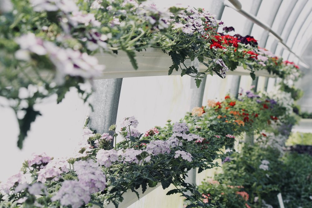 Indoor Garden. Photo by Sydney Rae courtesy of Unsplash.