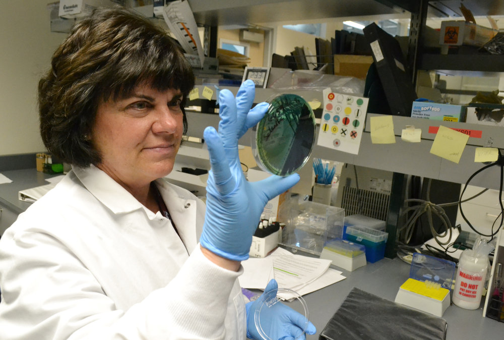 In this April 12, 2018 photo, scientist Karen Xavier holds a petri dish containing a stool sample of small bacteria colonies in Denver. DNA from samples like these are extracted and sequenced to help health investigators more quickly determine the source of a food-borne illness outbreak. AP Photo by P. Solomon Banda.