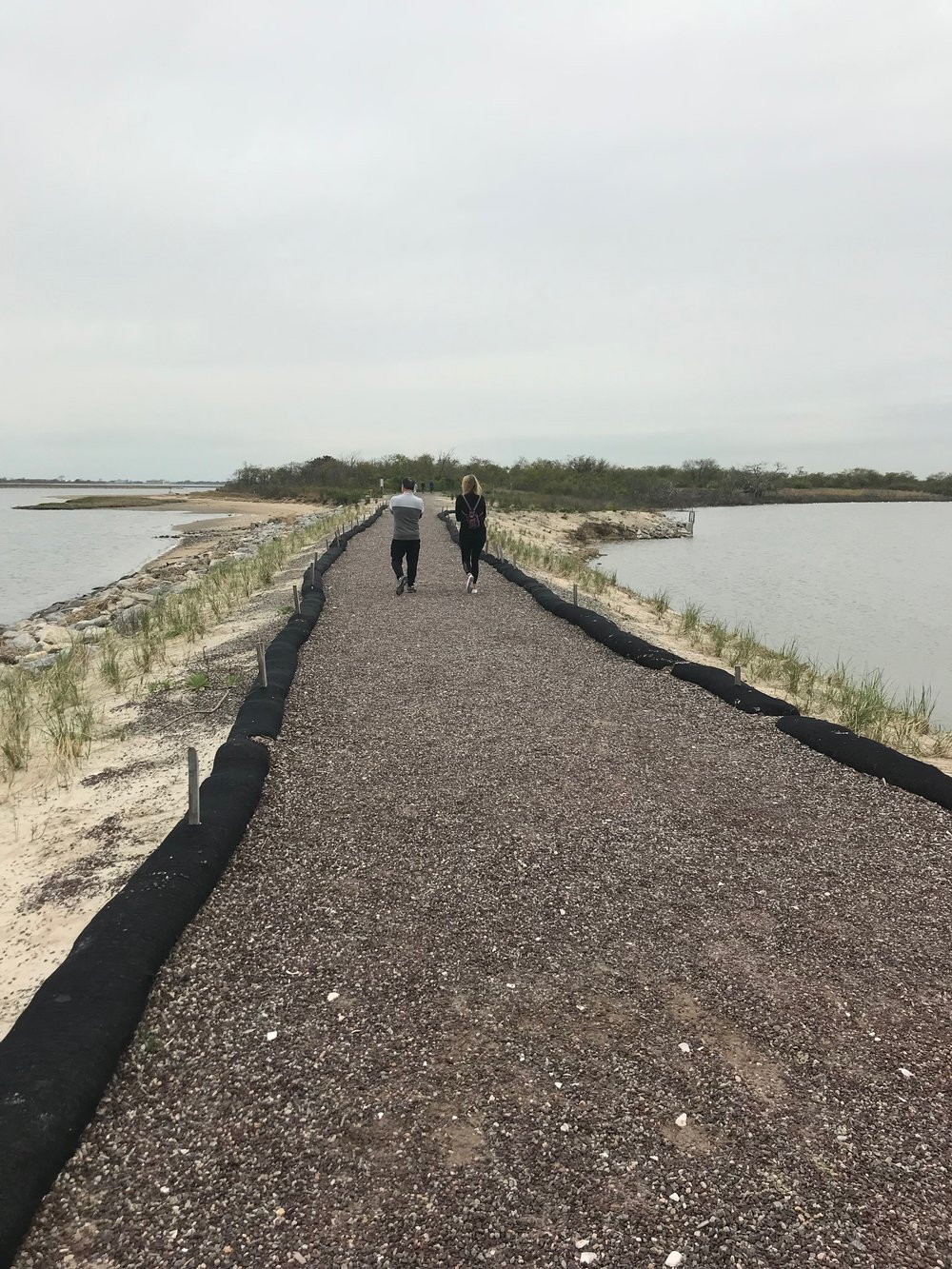 A trail through the Jamaica Bay Wildlife Refuge.  Eagle  photos by Jonathan Sperling.