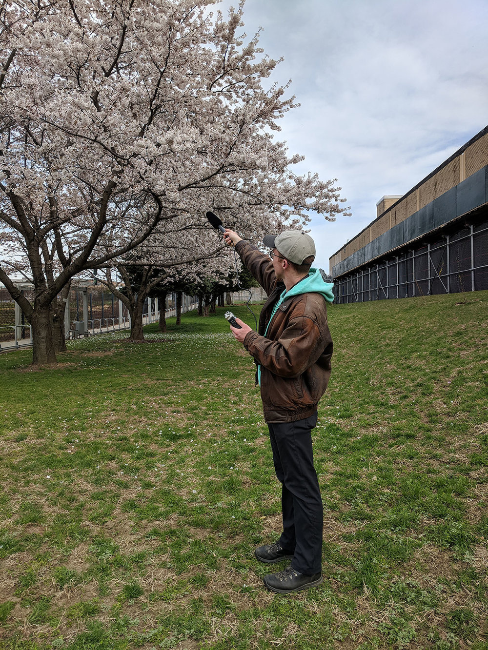 Queens College Ph.D. student Mason Youngblood is tracing the cultural evolution of birdsong through house finches. Photos courtesy of Queens College.