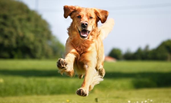 houseandhoundwalking.jpg