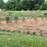 blackacre-community-garden.jpeg