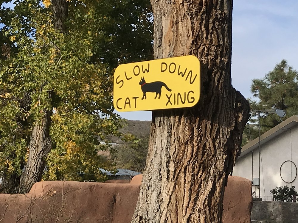 Cat xing in Hillsboro.