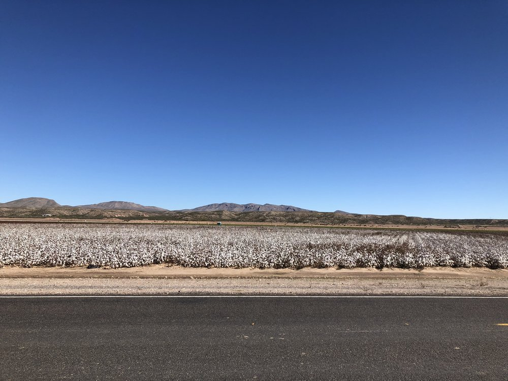 Cotton field (it kinda looks like it just snowed).