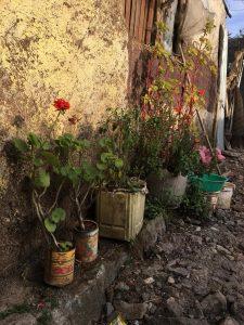korah-flowers-225x300.jpg