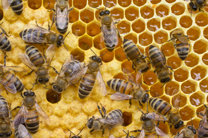 honey-bee-removal-pest-solutions-seattle.jpg