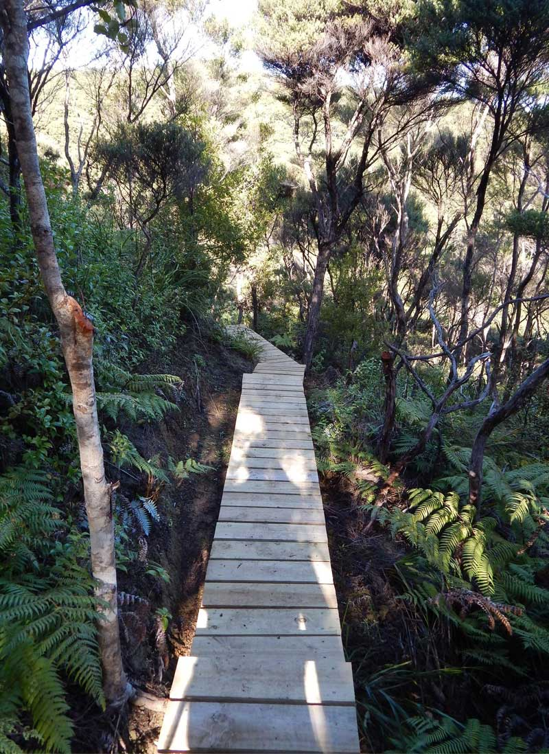Boardwalk & Kauri - Following the trail to the mouth of Mataia Creek, you then divert up into the QEII Covenanted area. A series of boardwalks and steps twist and turn through a beautiful kauri grove until you reach the fishing track.