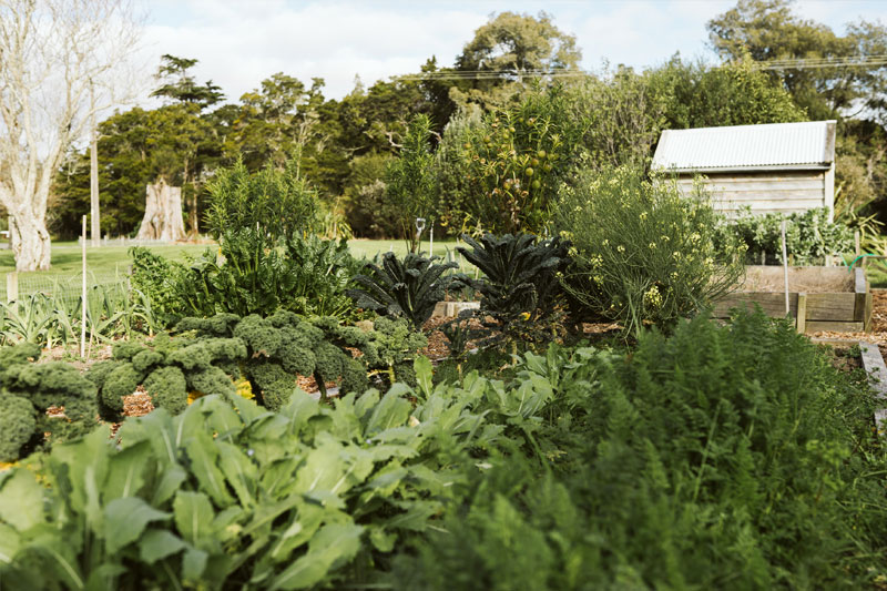 The garden - Up until 2005 the house sat in the middle of a paddock, framed by a single line of century old macrocarpa trees and an entrance way of pin-oaks. The surrounding 5ha of gardens have been a labour of love, established and maintained largely by a crew of family and volunteers and are recognised as a garden of significance by the NZ Gardens Trust.