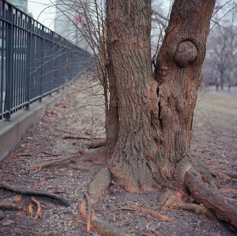 Orange Split, Riverside Park