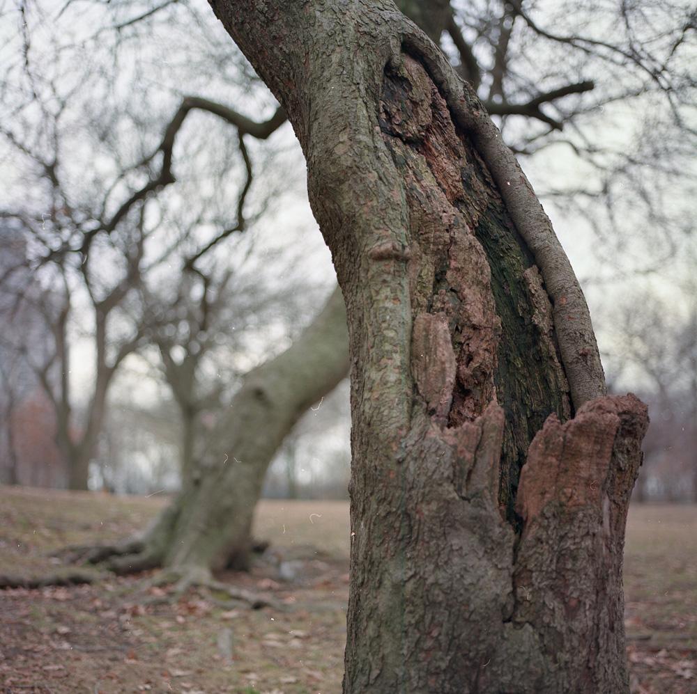 Peeling Back, Riverside Park