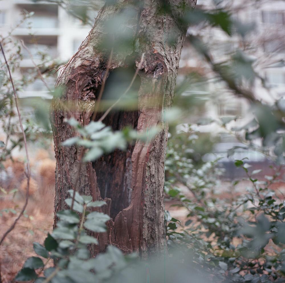 Hidden, Riverside Park