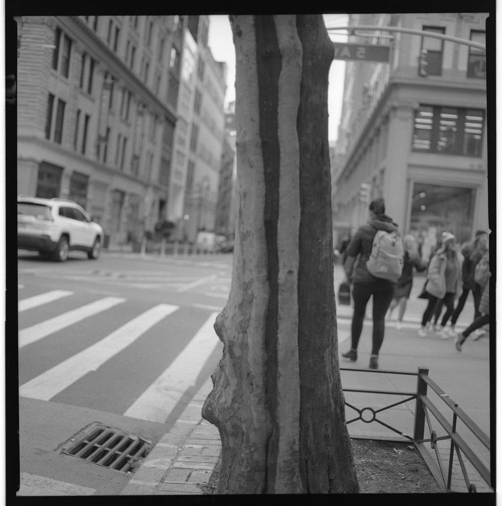 Striped Trunk, 13th Street