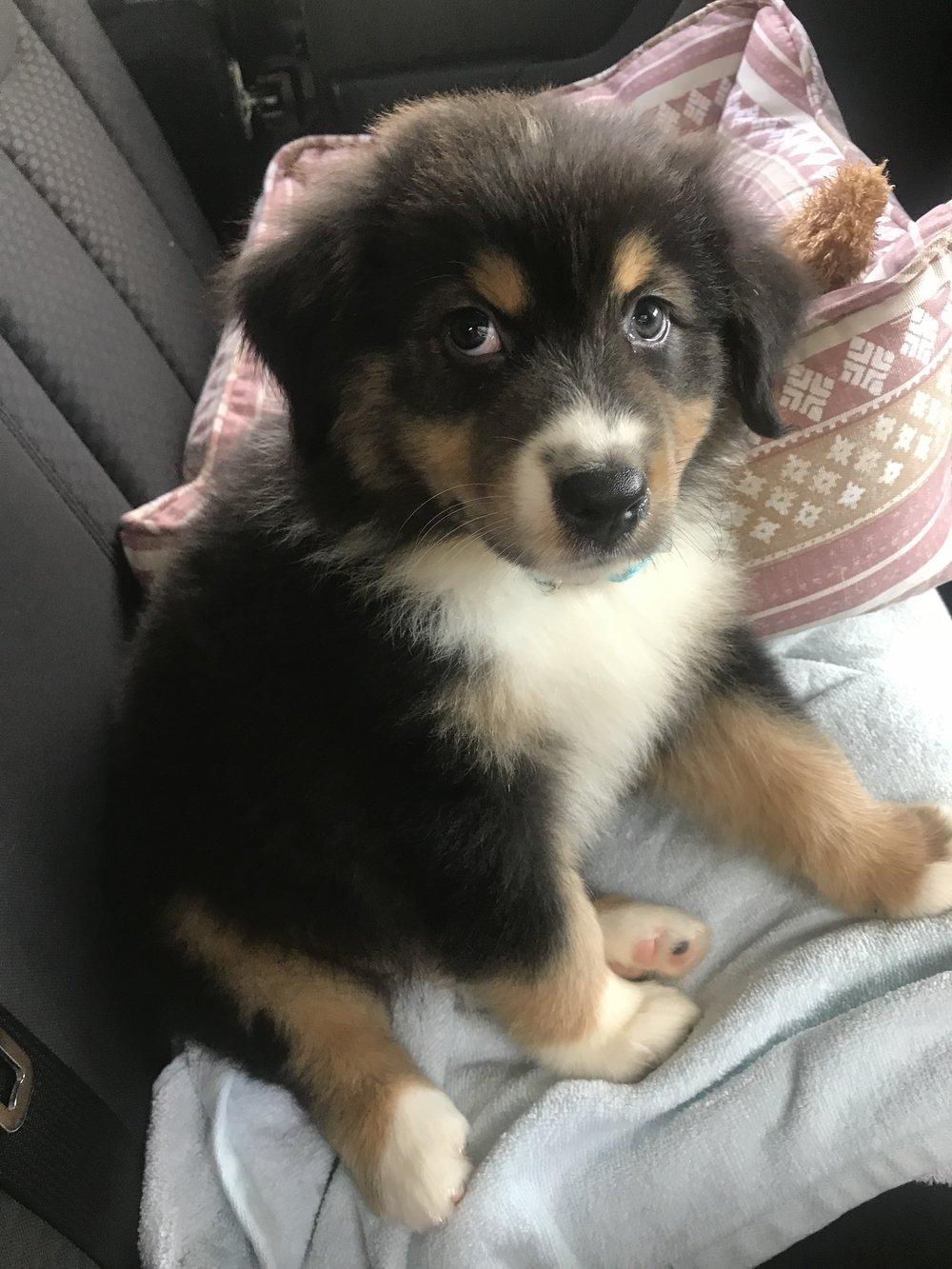 chester puppy.jpg