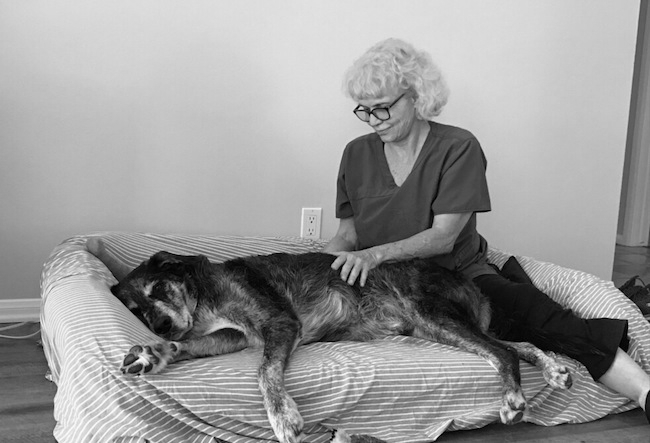Orthopedic Conditions and Post Op - Cruciate ligament tears, herniated discs and hip dysplasia are painful and challenging conditions. An experienced massage therapist can help your dog by loosening constrictions in muscle and connective tissue which restrict movement. Massage treatment also improves circulation which is so important because it feeds and nourishes damaged muscles and connective tissue.