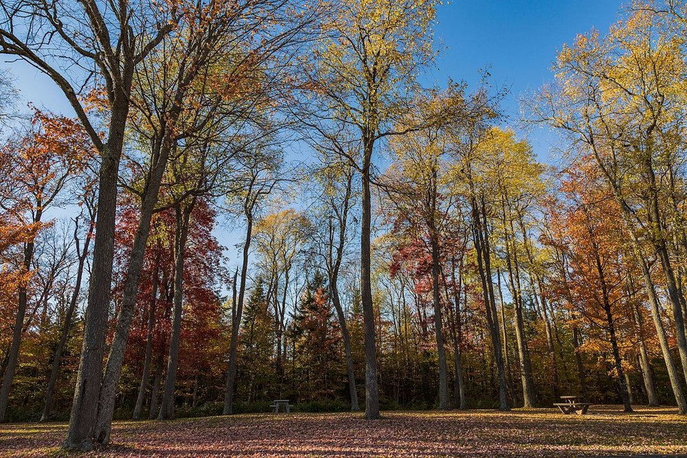 Northern Upstate Region -
