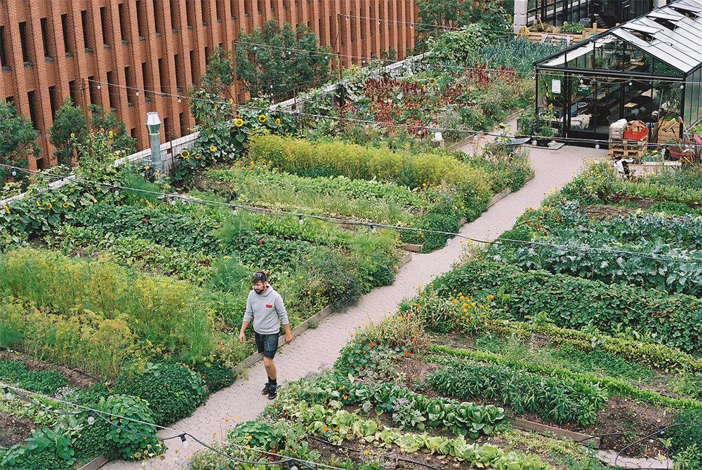 farmen, grøn, oppe fra med kristian.jpg