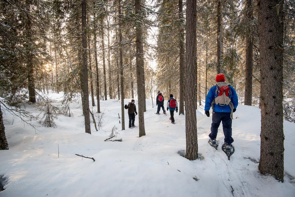 Finland_Snowshoeing_AlexFrood_20-2.jpg