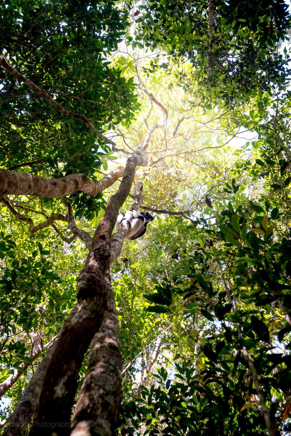 Madagascar-50.jpg