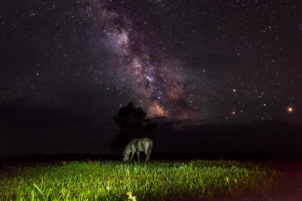 Mongol Horse, Mongolia