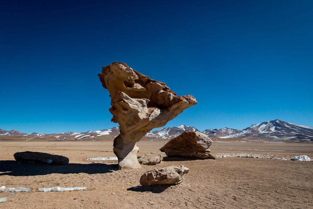 Stone Tree, Bolivia