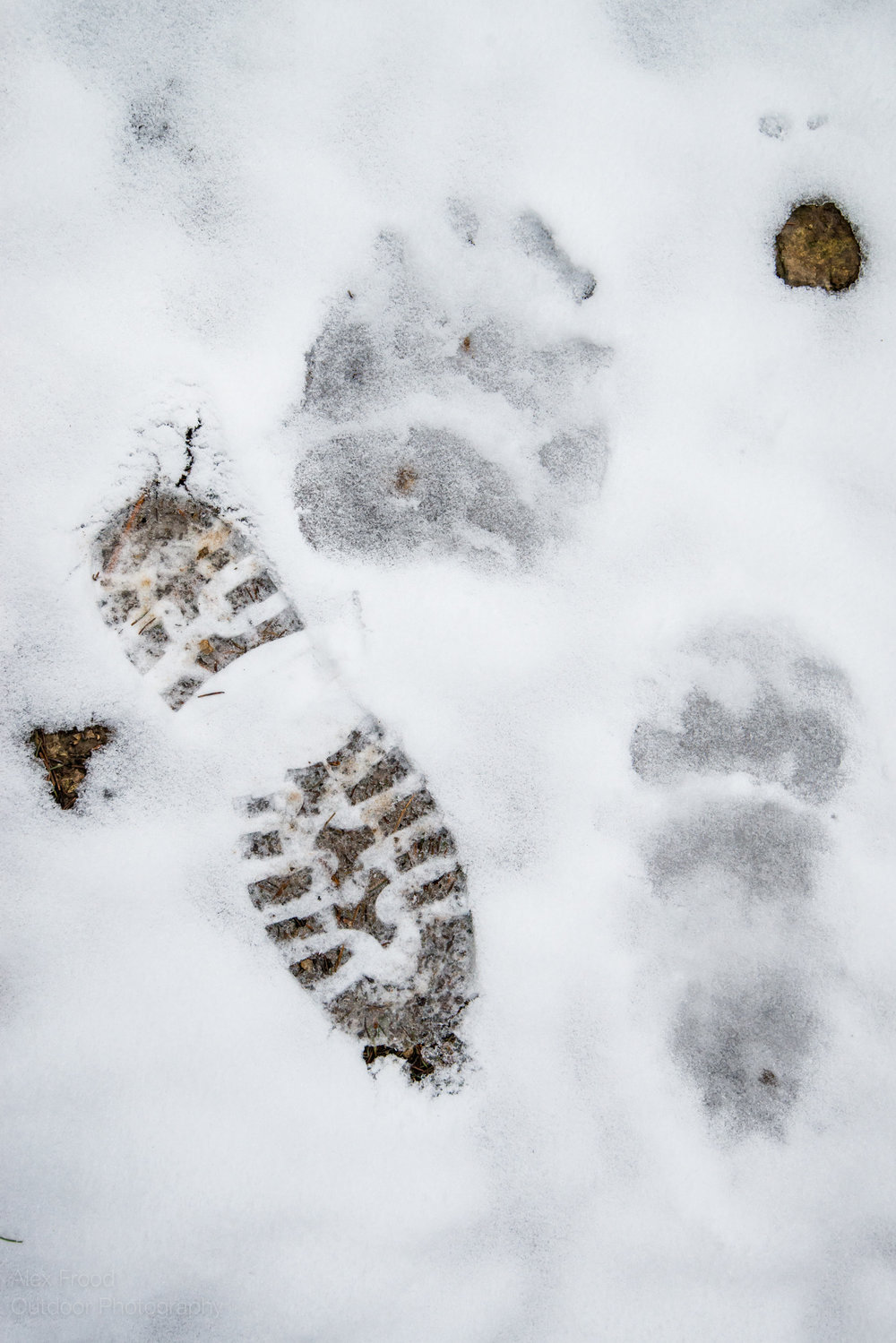 Bear footprint, Piatra Mare, Romania