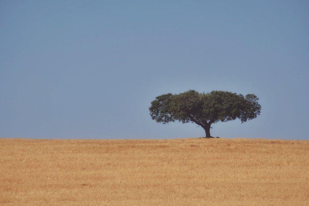 alentejo Landscapes  -