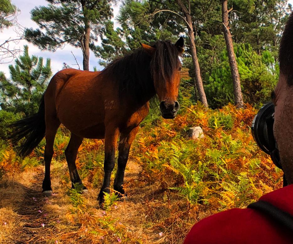 Sistelo wild horse photography