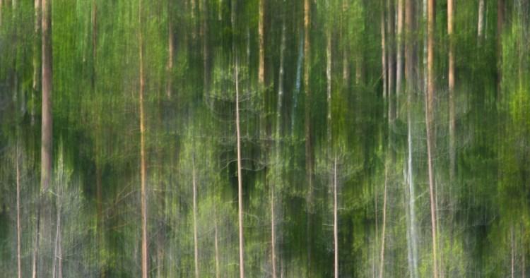 treepatterns.jpg