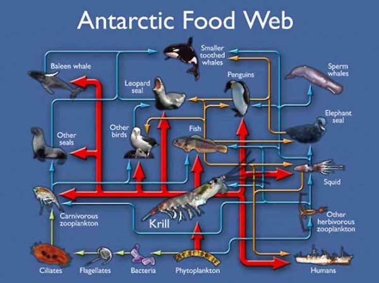 foodweb