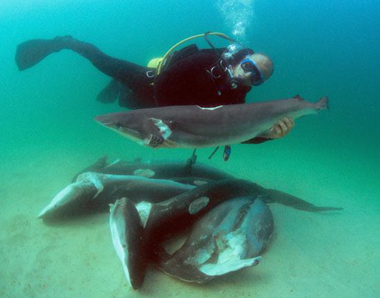 shark finned corpses
