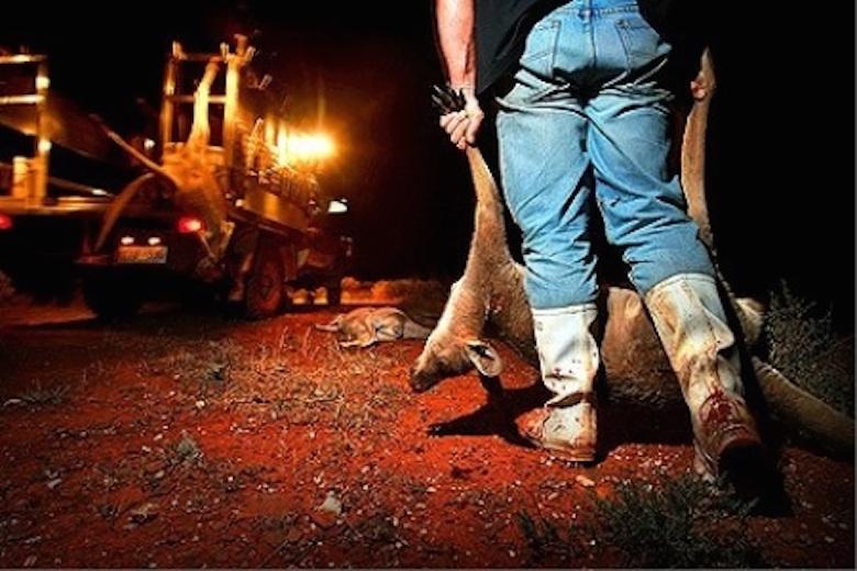 Kangaroo meat unhealthy