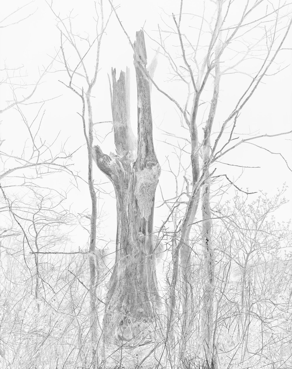 Jackdaw Tree, Suffolk, April 2015   Work Statement