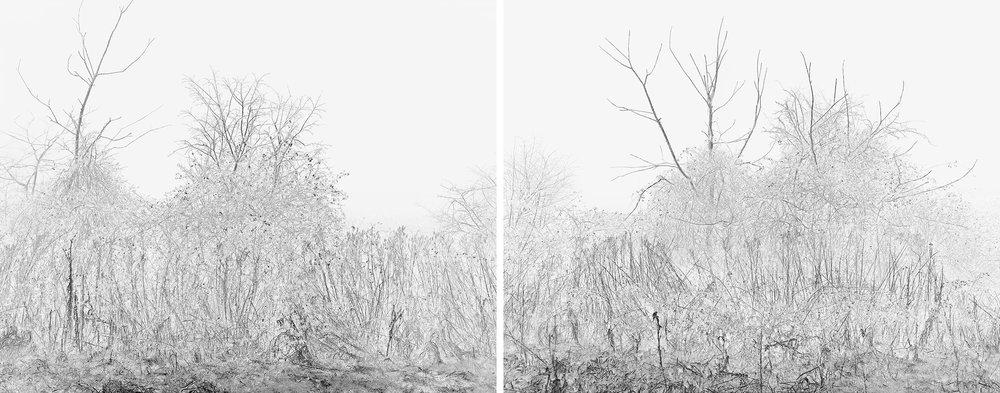 Hedge in Winter (Diptych), Suffolk, March 2015   Work Statement