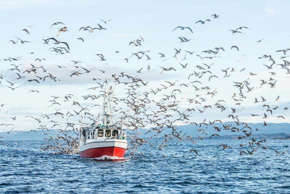 fiske_ hamnagaard-8007820.jpg