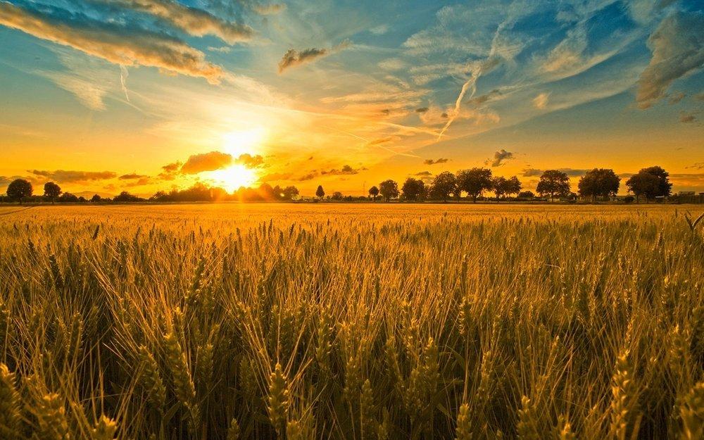 6839712-cornfield-sunset.jpg