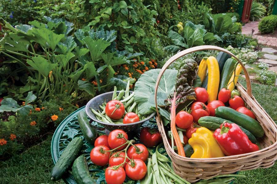 harvest_basket.jpg