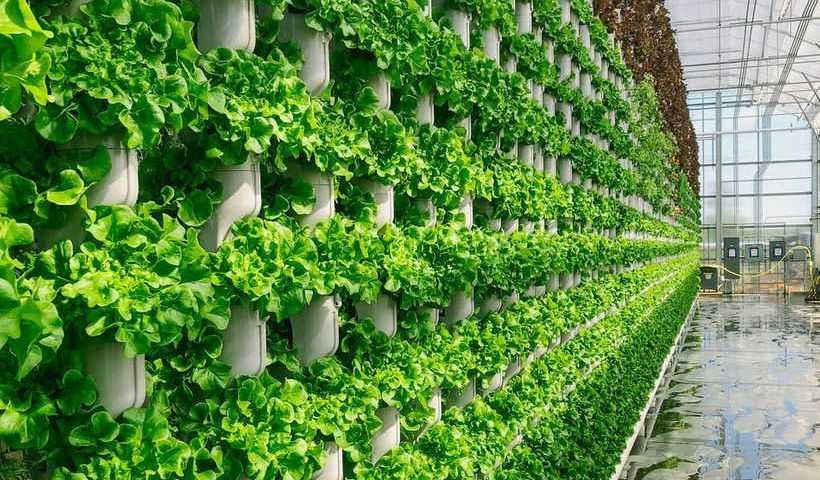 Eden-Green-Technology-Greenhouse-820x480.jpg