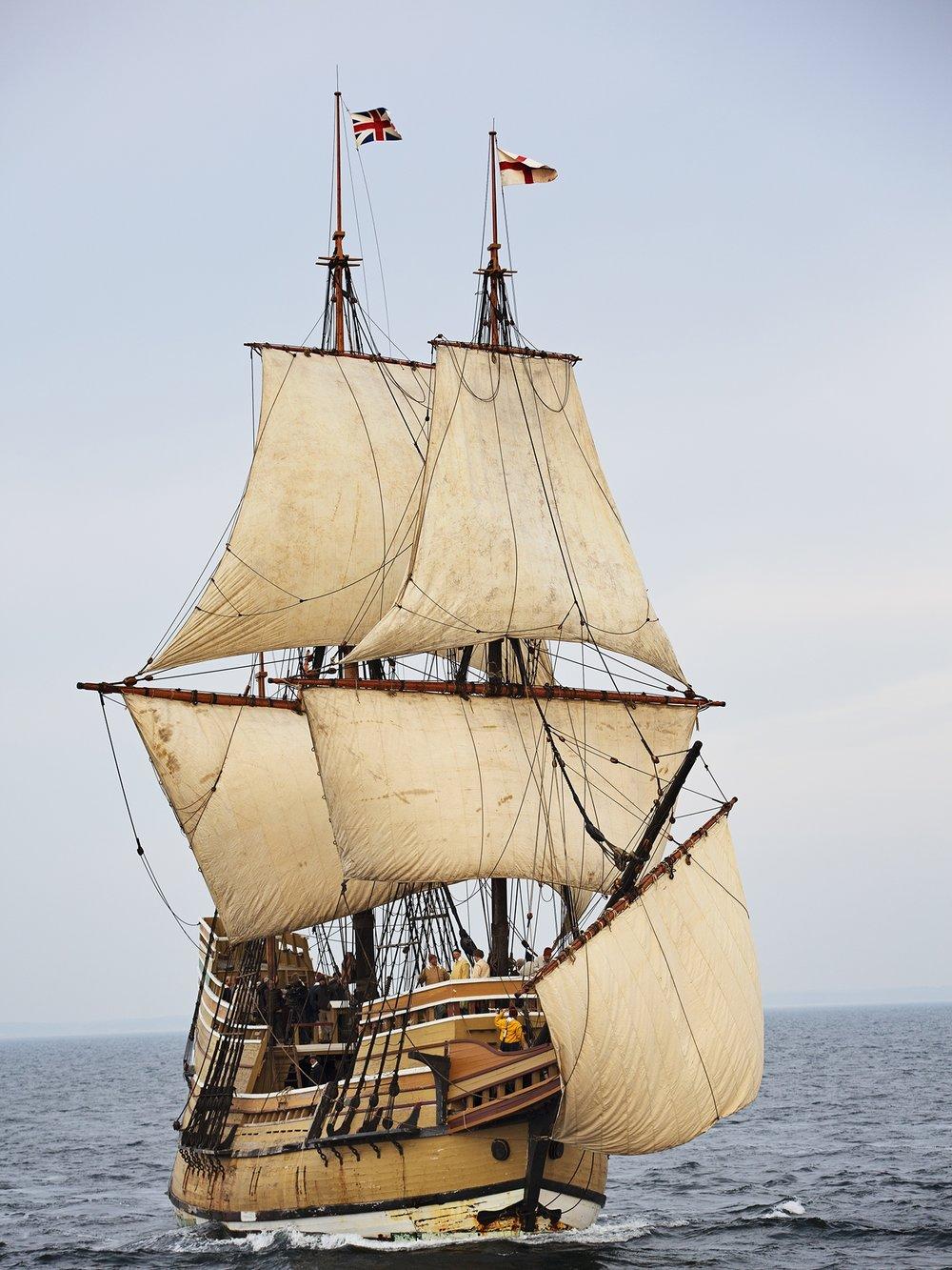 Mayflowerii_frontangle.jpg
