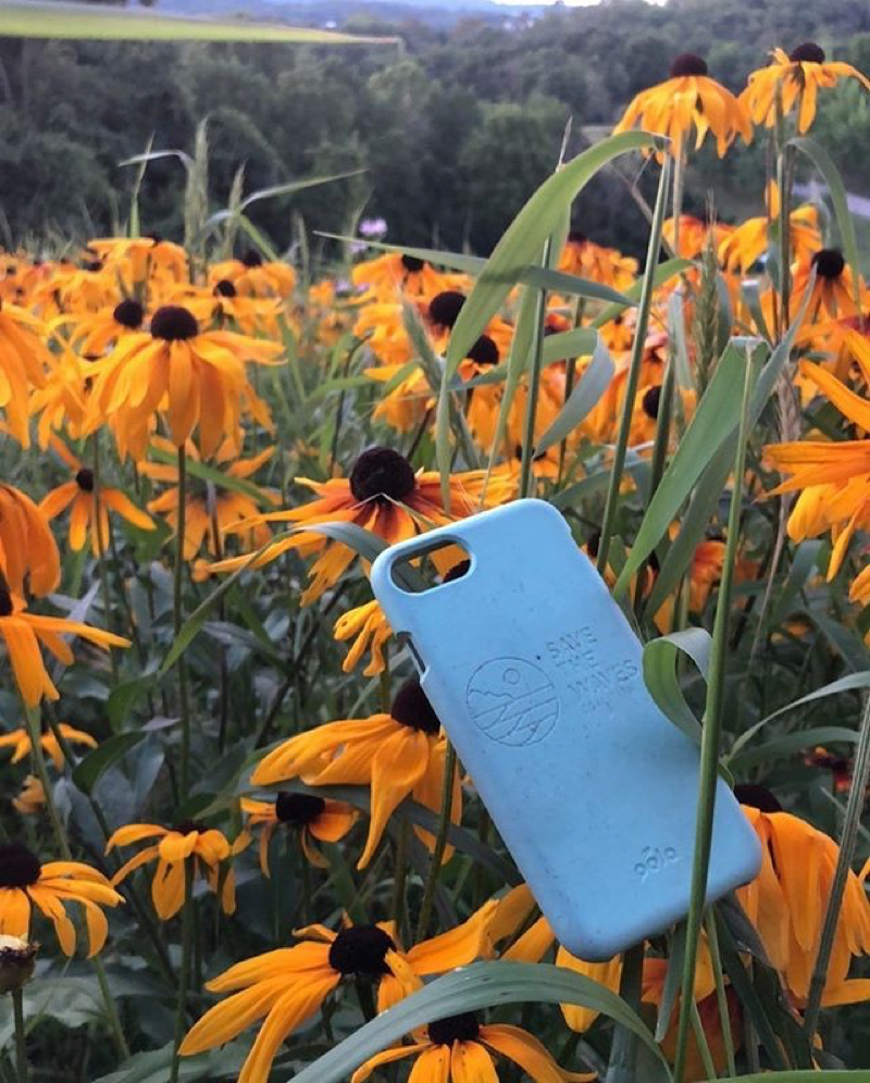 Blue pela case infront of a field of orange black-eyed susans