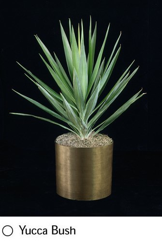 yucca-bush.png