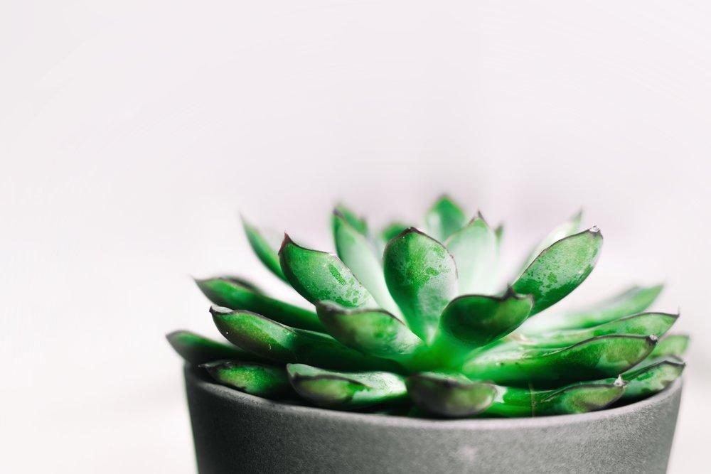background-botanical-cactus-834747.jpg