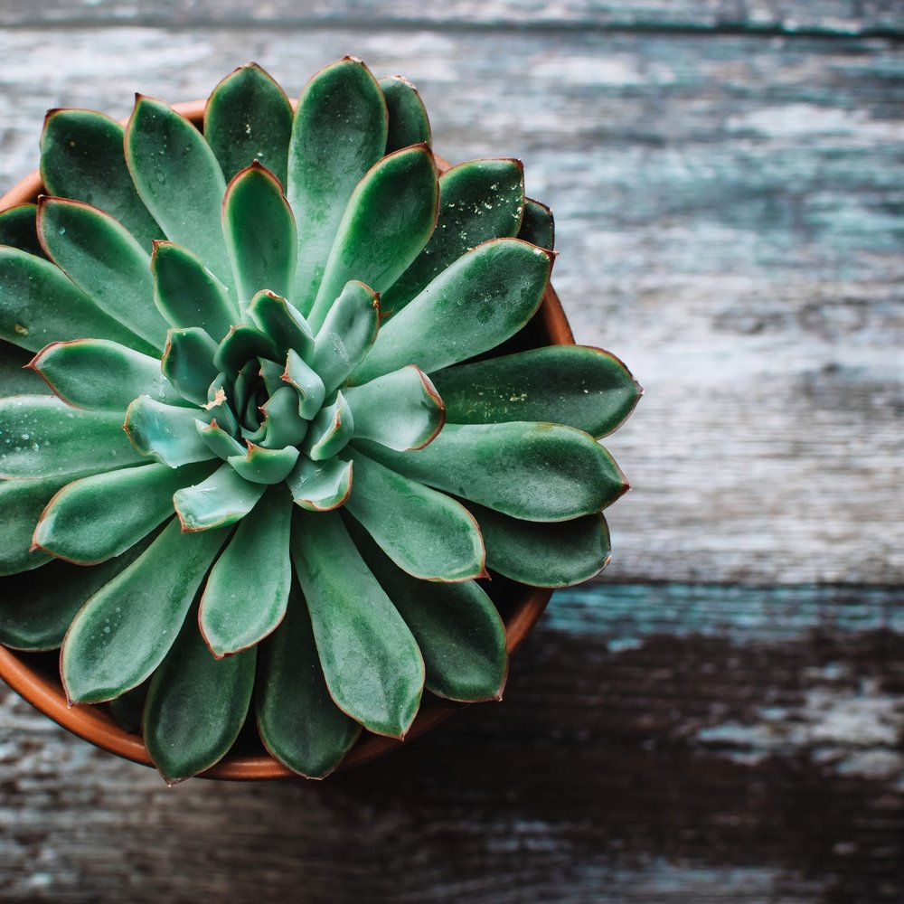 table-top-succulent-planter.jpg