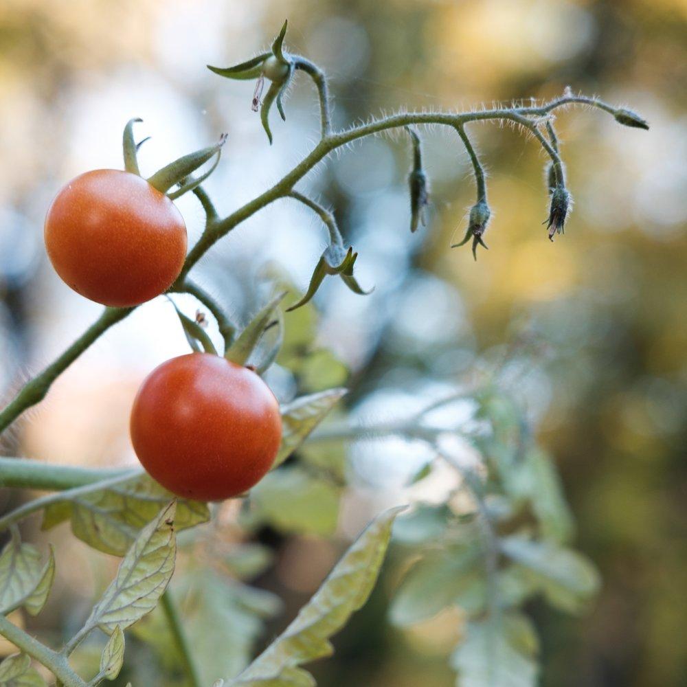 PlantAge_Garten_22.jpg
