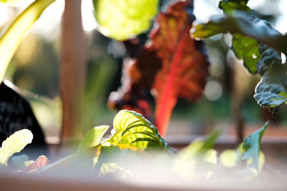 PlantAge_Garten_03.jpg