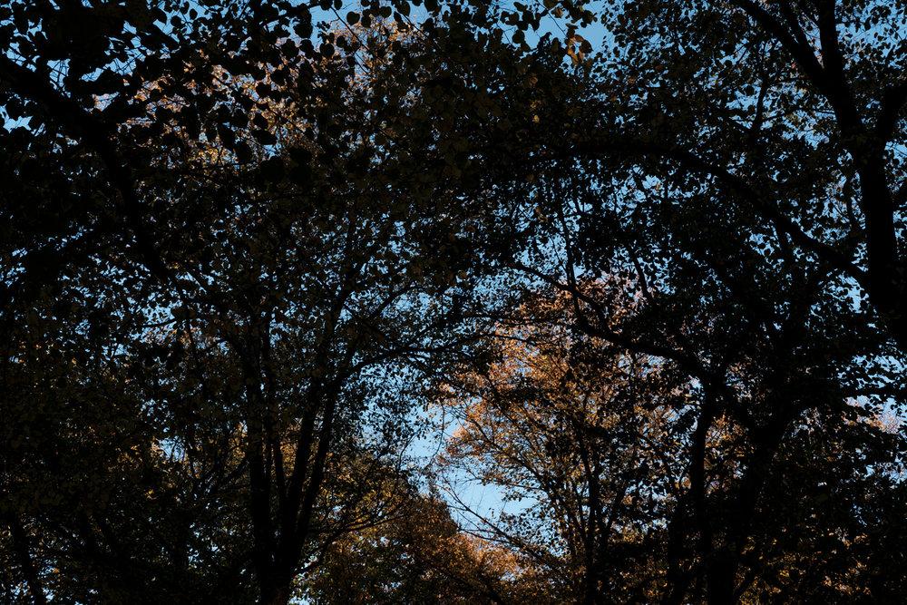 PlantAge_Garten_31.jpg